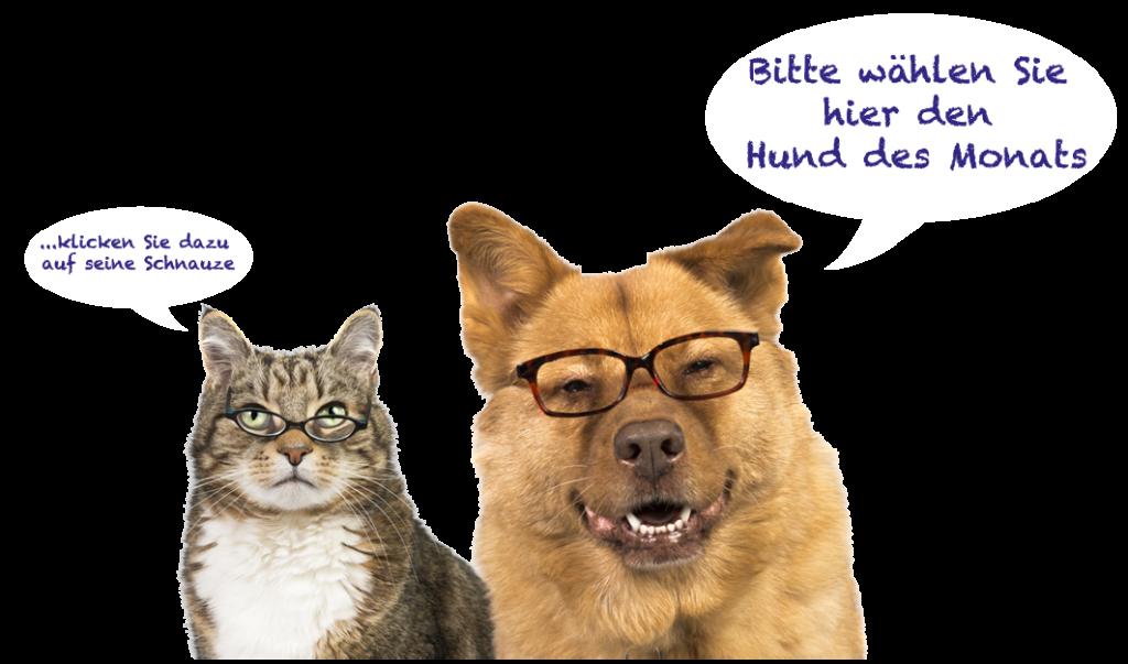 Katze_Hund_Voten