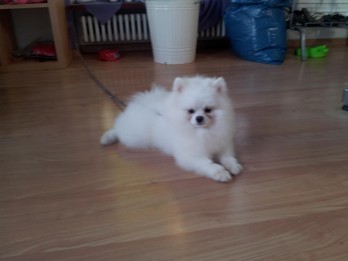 Hund des Monats September 2014