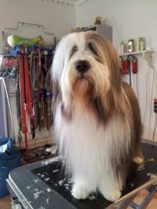 Hund des Monats Juli 2014