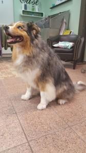 Hund des Monats Mai 2016
