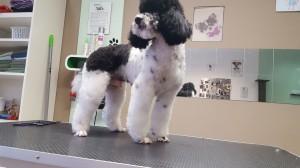 Hund des Monats November