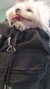 Hund des Monats Oktober 2017